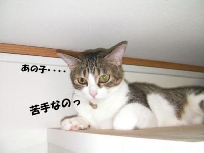 なめけり02