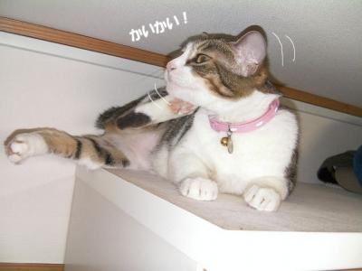 愛憎猫01