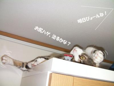 愛憎猫02