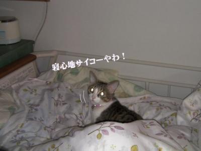 ねん猫や02