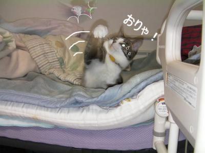 猫バレー02