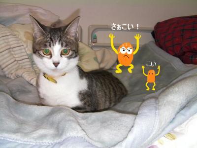 猫バレー03