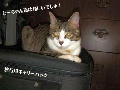 丑三時の猫01