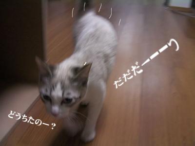 丑三時の猫02