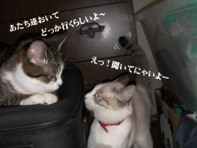 丑三時の猫03