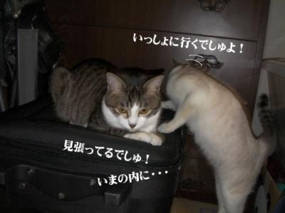丑三時の猫04