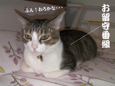 丑三時の猫05
