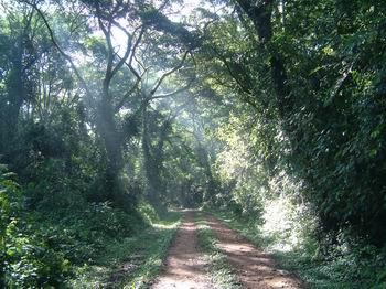 forest07.jpg