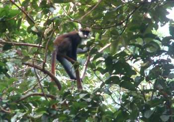 r-monkey02.jpg