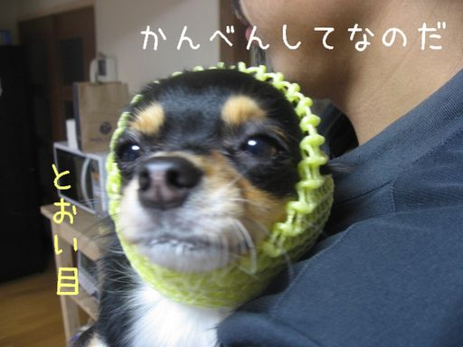 IMG_9331.jpg
