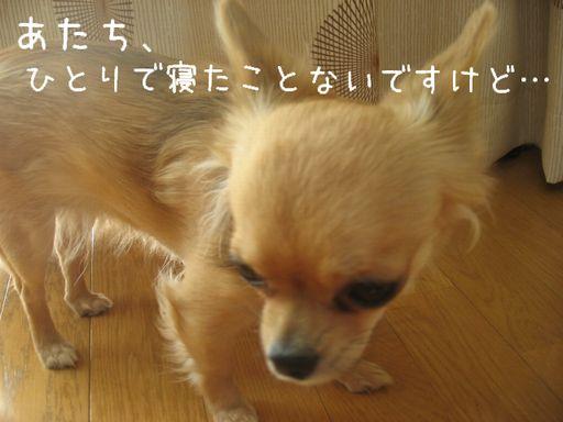 IMG_9372.jpg