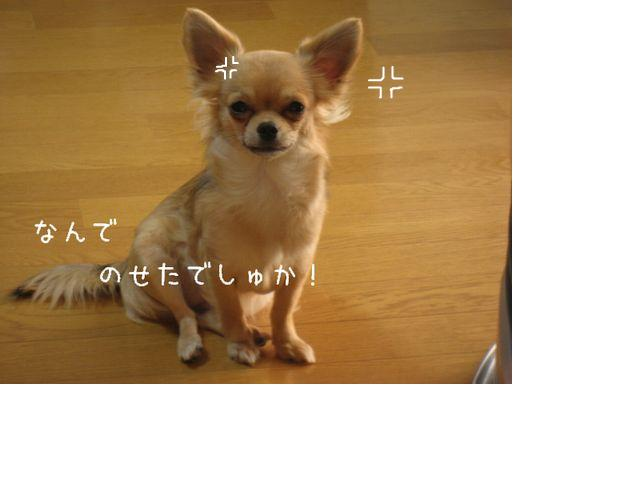 snap_nawaoki38_20092412493.jpg
