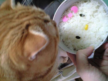kitty&m