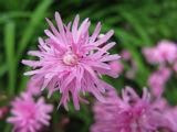 みどりの日の花