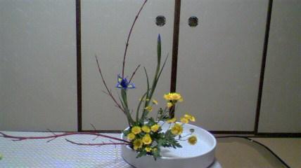 イリス・小菊