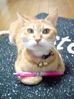 ペン回しする猫