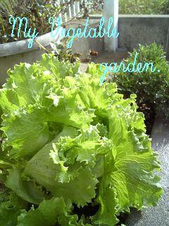 1022家庭菜園