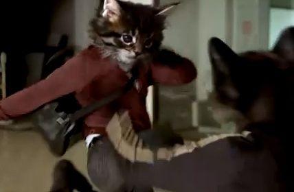 オーストラリアのカローラハッチバックのCMで猫が闘っているシーンの画像