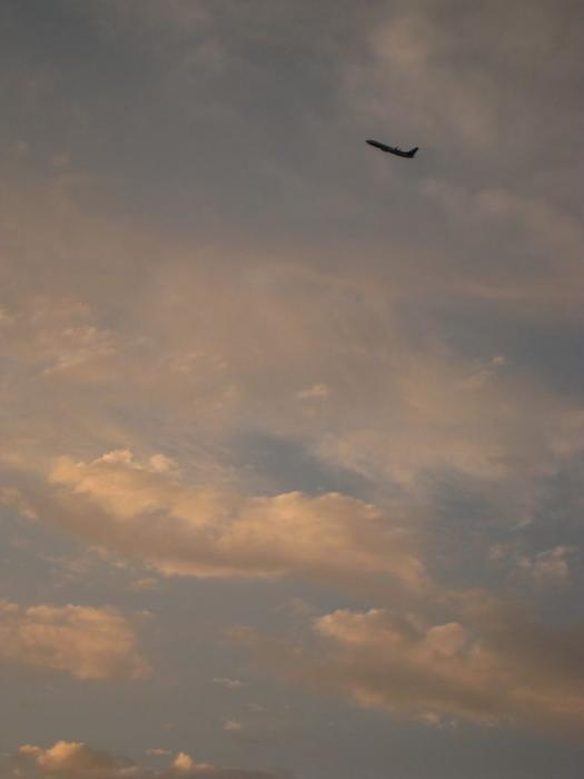 夕空 with ANA B737-881 ANA737@昆陽池公園(by IXY DIGITAL 910IS)