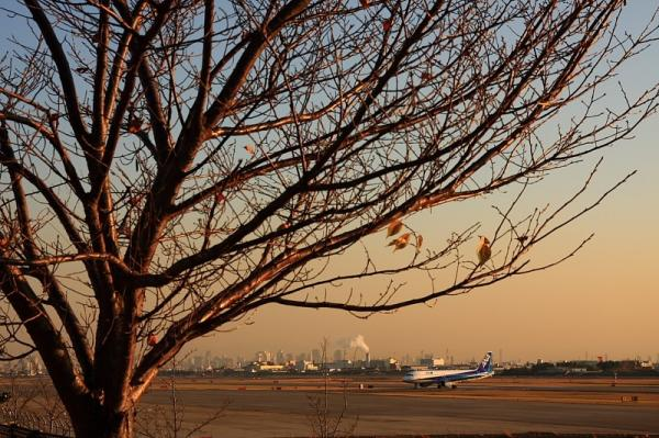 ANA A320 NH736@下河原緑地公園(by 40D with SIGMA 18-50)