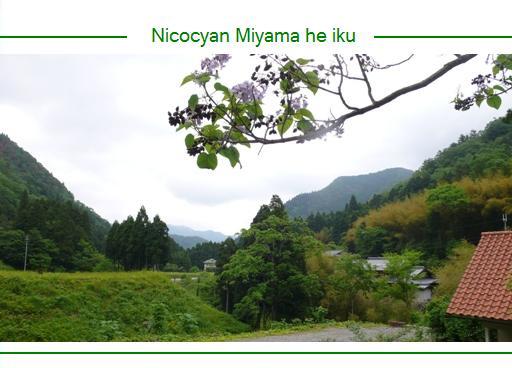 miyama1.jpg