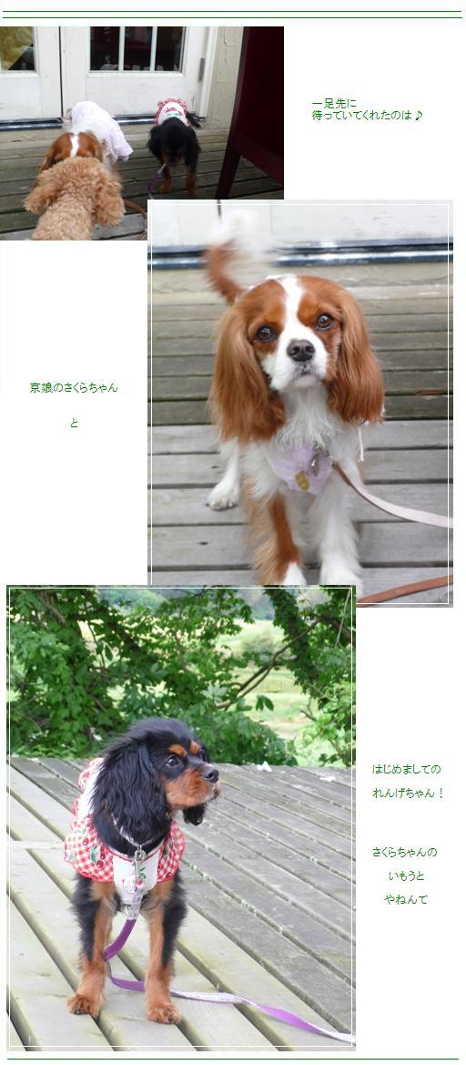 miyama3.jpg
