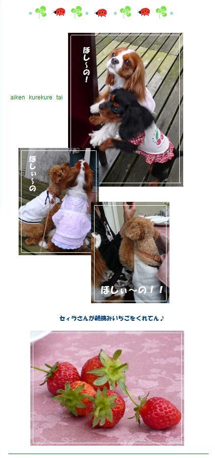 miyama7.jpg