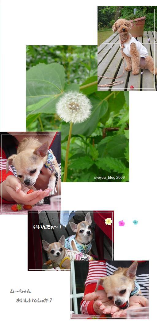 miyama8.jpg