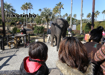3歳 動物園4