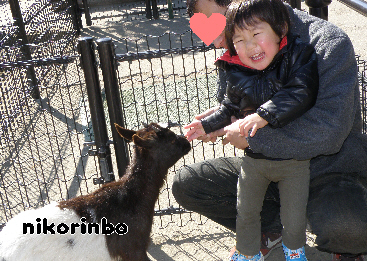 3歳 動物園2