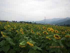 IMGP4494.jpg