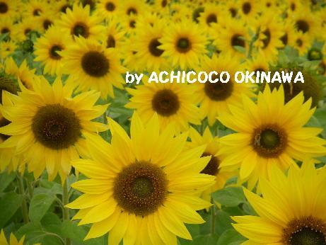 aahihihihi39.jpg
