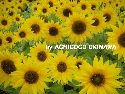 aahihihihi40.jpg