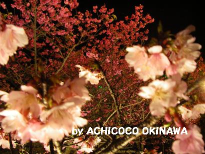 aanajijiji43.jpg