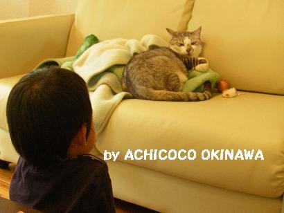 aanekocaca14.jpg