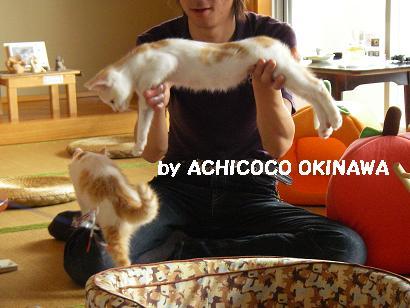 aanekocaca19.jpg