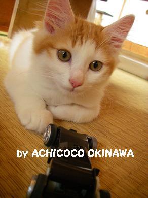 aanekocaca21.jpg