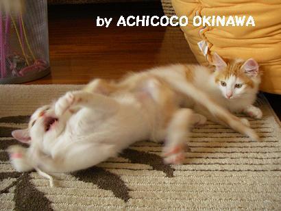 aanekocaca25.jpg