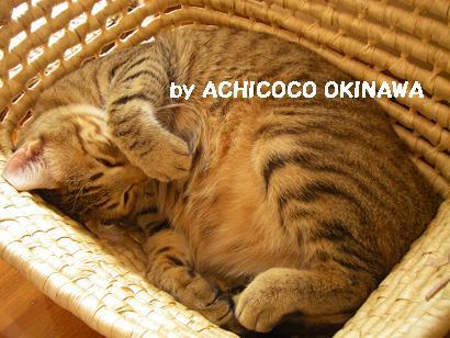 aanekocaca3.jpg