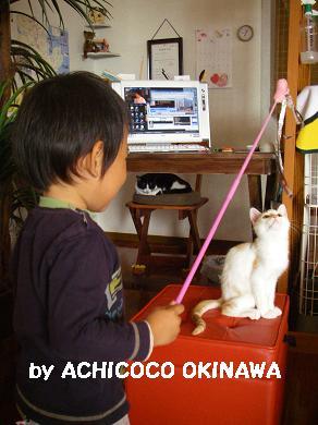 aanekocaca4.jpg