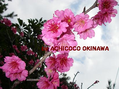 aaokinawannn4.jpg