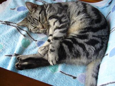 柔らかい猫
