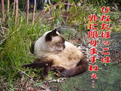 老猫みーちゃん