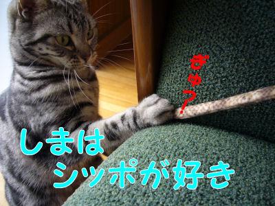 シッポきゃっち!