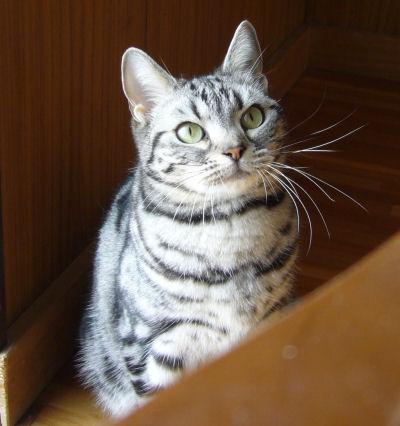本日は普通の猫写真