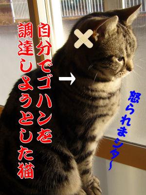 積極的すぎる猫