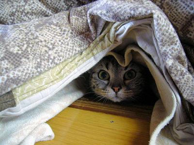 いいえ、猫穴です。
