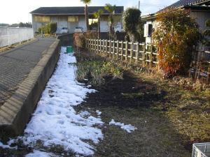 20100203雪解け2
