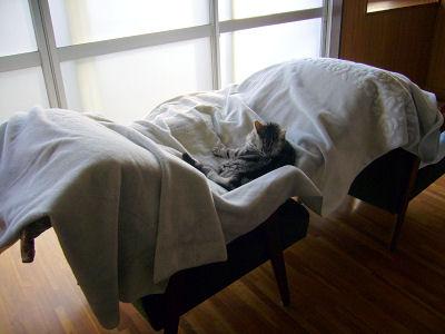 干したいのは猫ではなく布団