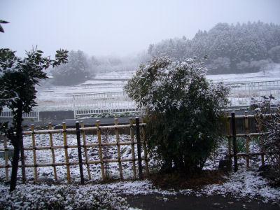 今度こそ最後の雪?1